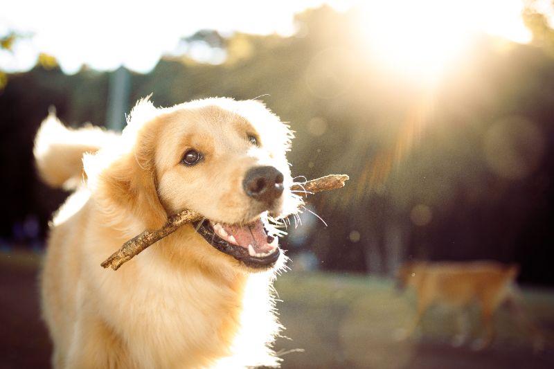 El Dorado Hills Pet Wellness Dog