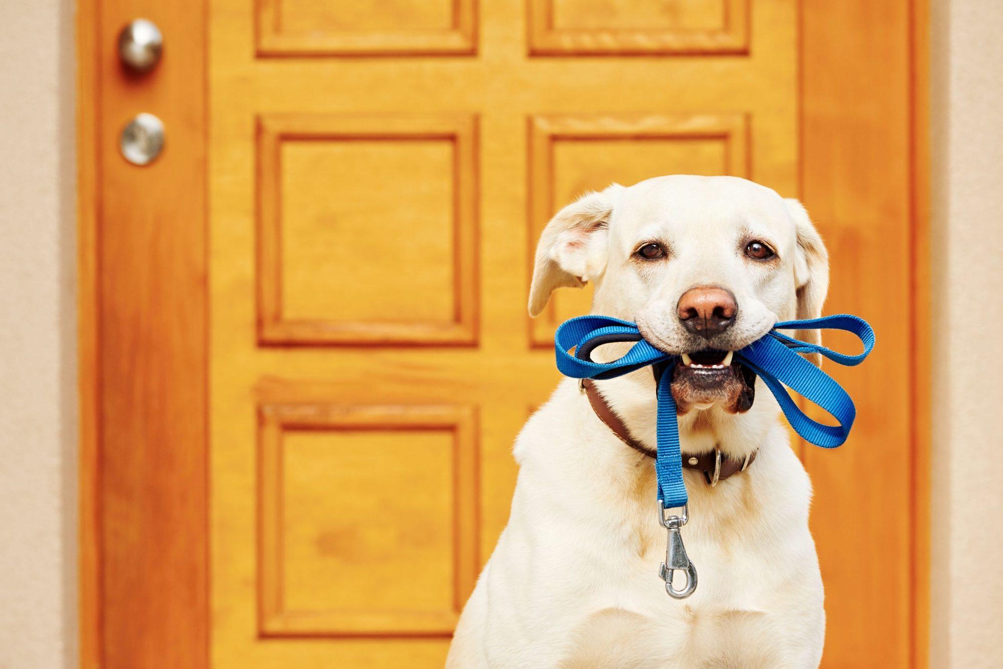 El Dorado Hills dog microchipped.